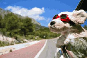 voiture et vacances